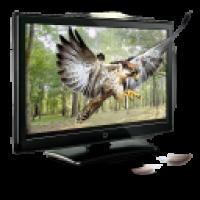 3D-Eagle-icon Работодателю